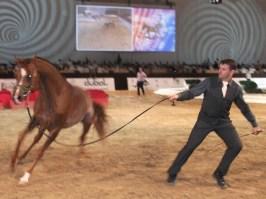 Tanzender araber